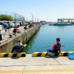 島根県でアオリイカが釣れるポイントを紹介する